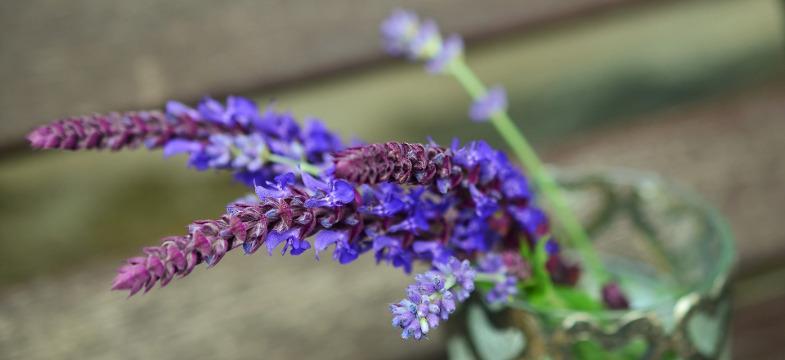 Lavendelöl herstellen
