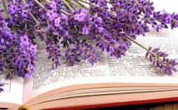 Anwendungsgebiete von Lavendel