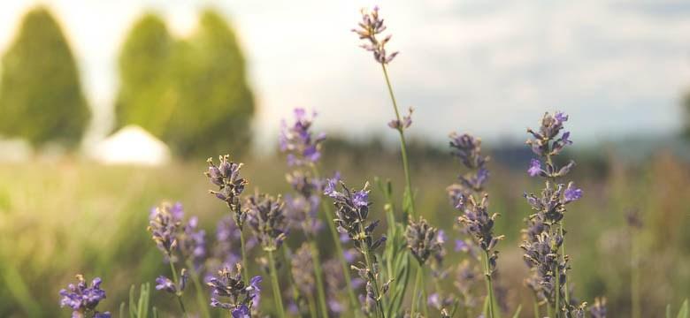 Selber machen mit Lavendel