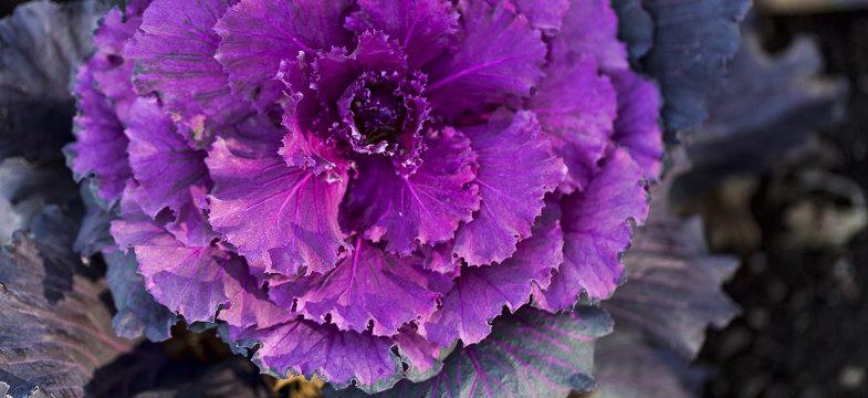 Salat mit Lavendel