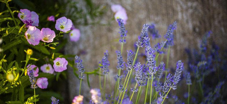 Lavendelöle imTest