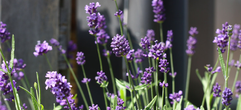 Lavendelölmischungen
