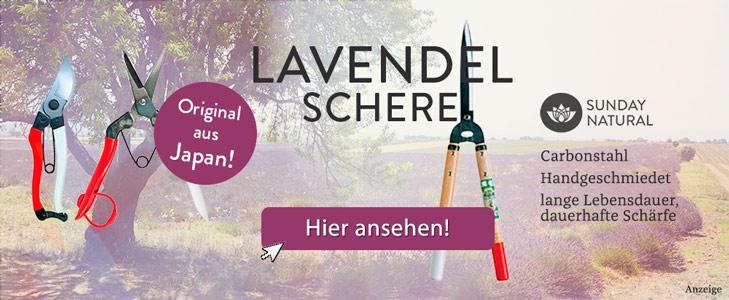 Lavendel Pflege | Dr. Schweikart Lavendel Pflanzen Tipps Pflege