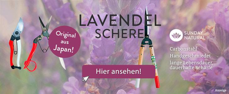 Lavendel schneiden   Dr. Schweikart