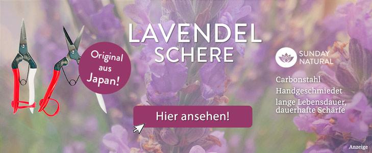 Lavendel Pflanzen | Dr. Schweikart Lavendel Pflanzen Tipps Pflege